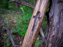 Choose your walking stick for the trails...