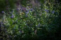 Gathering nectar...