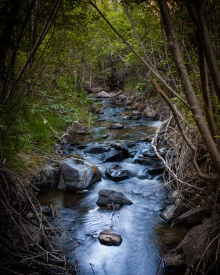 The main creek