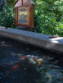The endlessly fascinating koi pond...